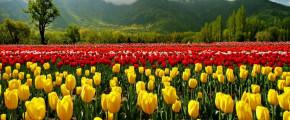 5D4N Kashmir Spring Tour