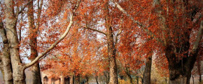 5D4N Kashmir Autumn Tour