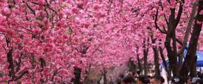 8D Shandong Flower & Fruit Special
