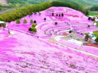 8D6N Hokkaido Spring Wonders (24 May)