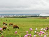 Hokkaido 4D3N Free & Easy
