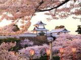 6D5N Central Japan Self-drive (Sakura ver)