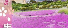 Flowers Wonders In 7-Prefectures Of Kyushu 9D7N