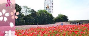 Flora Fantasia In Kanto Japan 8D5N