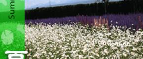 Flower & Onsen Indulgence In Hokkaido & Northern Japan 9D6N