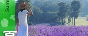 Lavender Story In Hokkaido & North Central Japan 9D6N