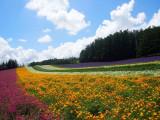 7DAYS HOKKAIDO WONDERLAND