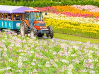 9D7N Colourful Hokkaido (24 Jul)