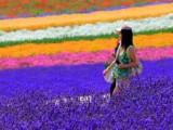 7D6N Hokkaido Lavender (5 Jul)