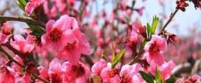 8D Shanghai Blooming Flower Value Tour