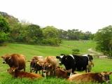7 Days Surround Island / Taipei / Farm {2-to-go}