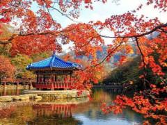 8D Romantic Autumn In Korea Naejangsan