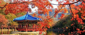 8D Romantic Autumn In Korea Naejangsan