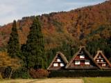 7D5N Central Japan + Gassho Village (Autumn)
