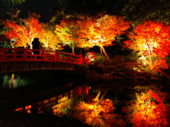 7D6N Autumn Tottori Self Drive