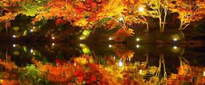 7D6N Autumn Shikoku Self Drive