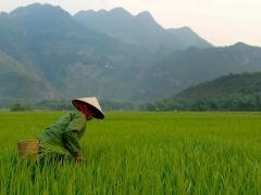 4D3N Ho Chi Minh City Cu Chi Tunnels - My Tho Mekong Delta