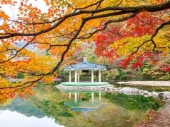 8D 6N Southern Beauty of Korea
