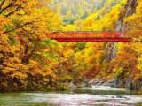 6D5N Autumn Central Hokkaido Self Drive