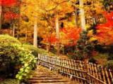 8D7N Autumn Kyushu Self Drive