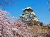 7D5N Honshu Series ~Falling in Love with Sakura~