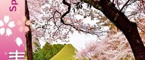 Spring Extravaganza in Kyushu Japan & Busan Korea 9D6N