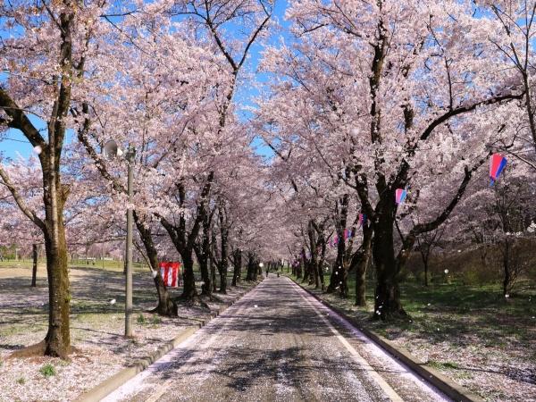 8D5N The Wonders of Spring in Kanto Japan