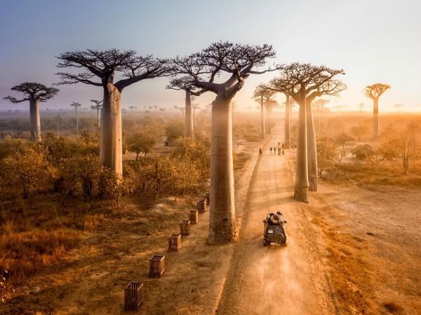 12D9N HIGHLIGHTS OF MADAGASCAR (APR - OCT)