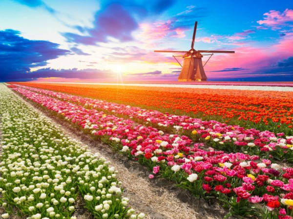 10D8N INSIGHTS OF NETHERLANDS (APR - OCT)  ITINERARY