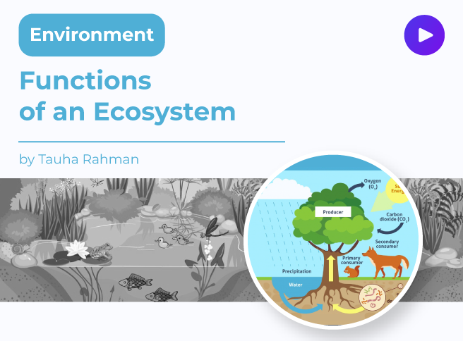 Functions of an Ecosystem