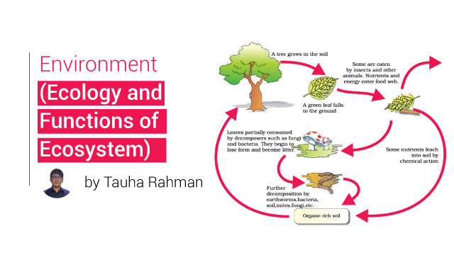 Ecology and Functions of Ecosystem