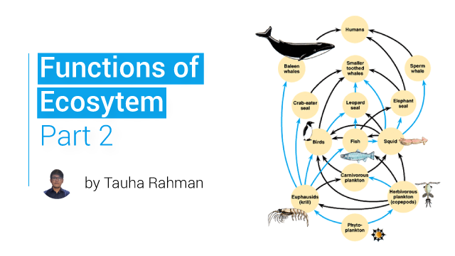 Functions of Ecosystem Part 2