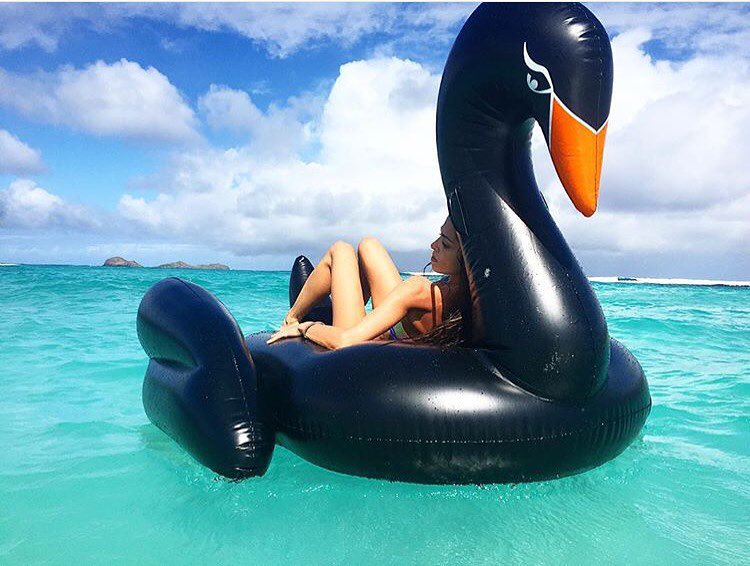 Charles Black Swan Floats | Le Float