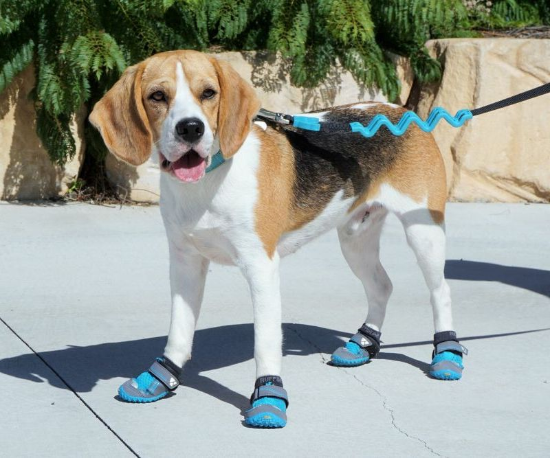 ... great and my dog Baxter loves the new blue colour and being able to get  outside to explore the yard and go on walks again. Highly recommend these  boots. c5409f30f970