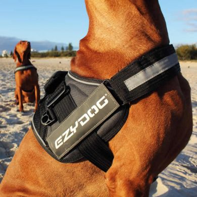 thumb_ezydog-convert-harness-beach_adaptiveResize_390_390.jpg
