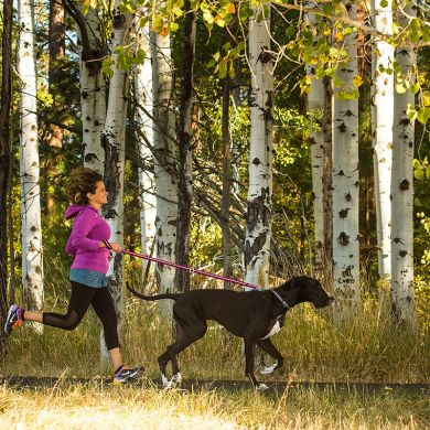 thumb_Ruffwear-Slackline-Leash-Running_adaptiveResize_390_390.jpg