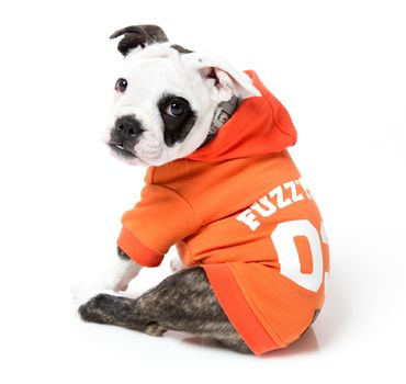 thumb_FuzzYard-Orange-Hoody-Dog-Coat-sit_adaptiveResize_390_390.jpg