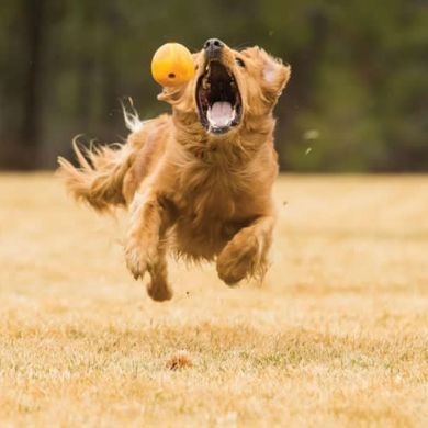 thumb_ruffwear-huckama-dog-toy-retrieve_adaptiveResize_390_390.jpg