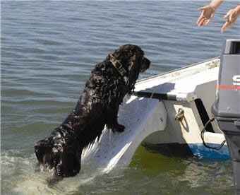 thumb_skamper-ramp-dog-boat-ramp-exit_adaptiveResize_390_390.jpg