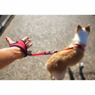 thumb_Charlie_Riverside by Trav Cooper_Handy Leash_WEB _adaptiveResize_390_390.jpg
