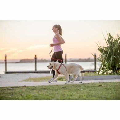 thumb_Olly_Bribie Island by Charlotte Reeves_Handy Leash_2_WEB_adaptiveResize_390_390.jpg