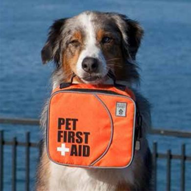 thumb_canine-friendly-first-aid-kit-for-dogs_adaptiveResize_390_390.jpg