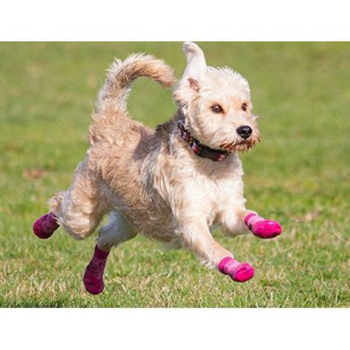 thumb_pawks-sport-outdoor-dog-socks-run_adaptiveResize_390_390.jpg