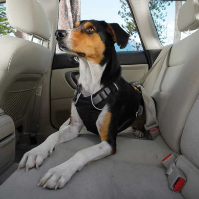 thumb_ruffwear-load-up-harness-seated_adaptiveResize_390_390.jpg