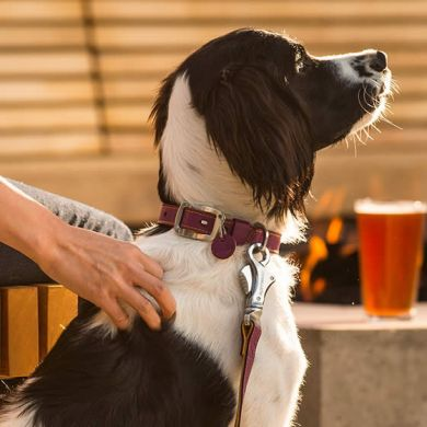thumb_Ruffwear-Frisco-Collar-Beer_adaptiveResize_390_390.jpg