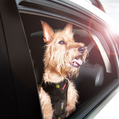 thumb_Ezydog-Drive-Harness-Car-Window_adaptiveResize_390_390.jpg