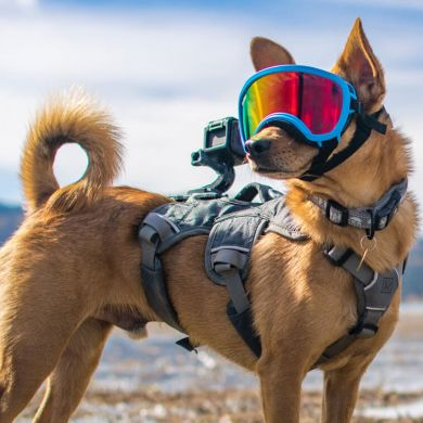 thumb_rex-specs-dog-goggles-harness_adaptiveResize_390_390.jpg