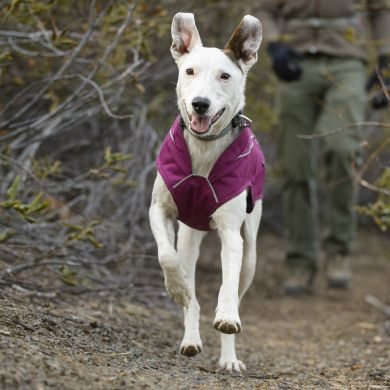 thumb_ruffwear-k9-overcoat-purple-front_adaptiveResize_390_390.jpg