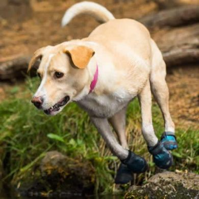 thumb_Ruffwear-Grip-Trex-Dog-Boots-Mud_adaptiveResize_390_390.jpg