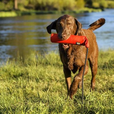 thumb_Ruffwear-Lunker-Dog-Toy-Running_adaptiveResize_390_390.jpg